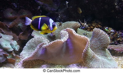 coral life underwater video 1080p