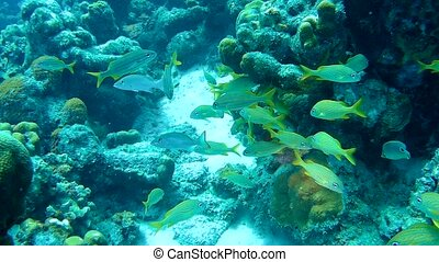 coral life underwater video 1080p Caribbean Sea - coral life...