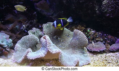 coral life underwater video 1080p