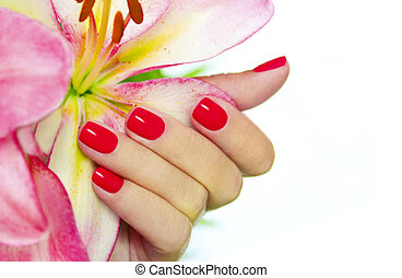 Coral nails on young female hands with pink Lily on a white background.