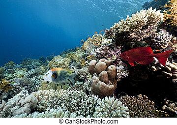 coral, océano