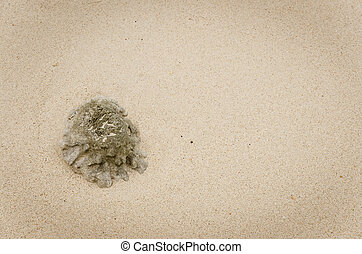 Coral on the sand at beach.
