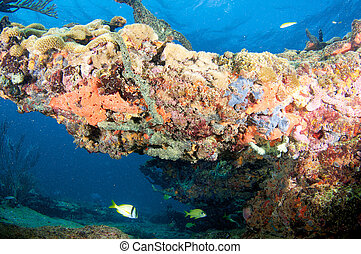 Coral Outcropping picture taken in south east Florida.