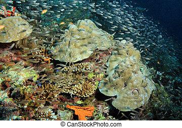 coral, pez, arrecife, educación