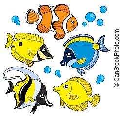 coral, pez, colección