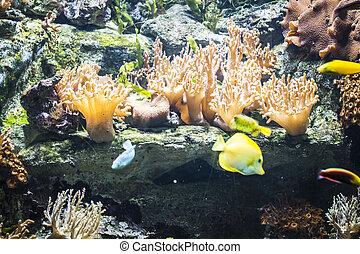 coral, pez, fondo del mar, vacaciones, arrecife