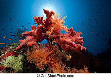 coral, pez, océano