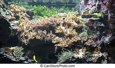 Coral Reef And Fish In Underwater Aquarium