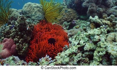 Coral reef and fishes underwater.