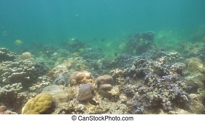 Coral reef and tropical fish. Bali,Indonesia. - Fish and...