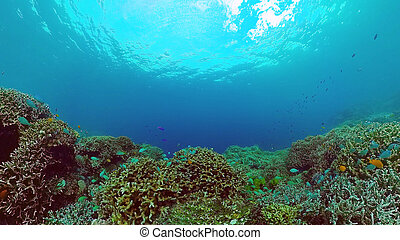 Coral reef and tropical fish. Bohol, Philippines.