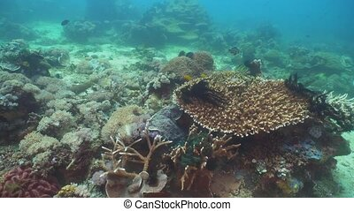 Coral reef and tropical fish. Philippines, Mindoro. - Fish...