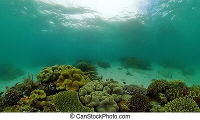 Coral reef and tropical fish. Philippines.