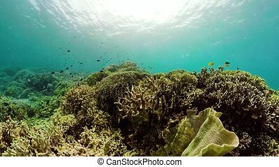 Coral reef and tropical fish underwater. Camiguin,...