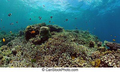Coral reef and tropical fish underwater. Philippines.