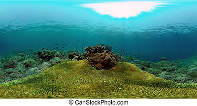 Coral reef and tropical fish underwater. Philippines. Virtual Reality 360