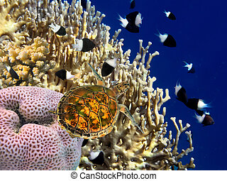 Coral reef and turtle