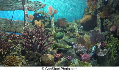 Coral reef and wooden wreck at the bottom attract tropical...