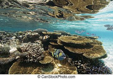 Coral Reef - Ari Atoll - Maldives - Colorful fish on a coral...