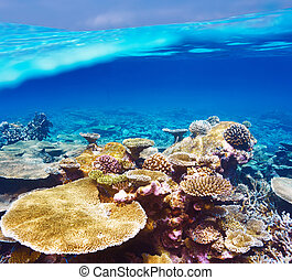 Coral reef at Maldives - Coral reef at South Ari Atoll, ...