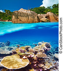 Coral reef at Seychelles split view