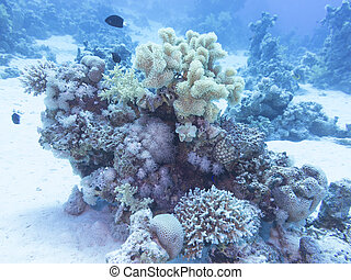 Coral reef at the bottom of tropical sea, underwater.