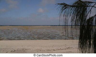 Coral Reef Beach, Lady Elliot Island