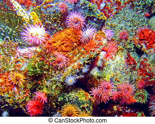 Colorful underwater sea coral reef with a lot of polyps