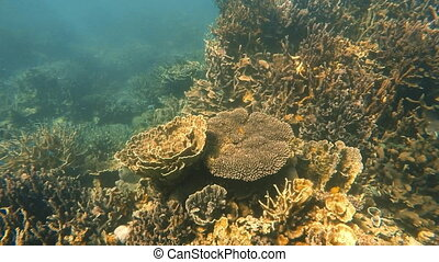 Coral reef in Australian sea