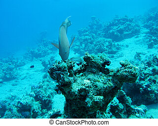 coral reef in deep water at the bottom of tropical sea, underwater