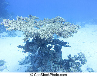 Coral reef in tropical sea, underwater
