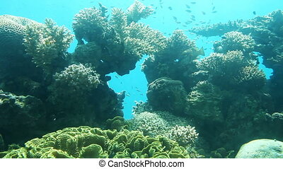 Coral reef of Red Sea. Underwater Observatory Marine Park....