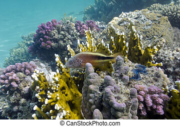 coral reef on the bottom of red sea