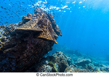 Coral reef on the rock
