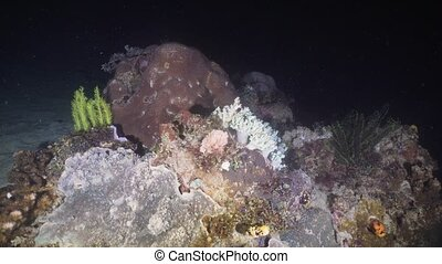 Coral reef. Philippines, Mindoro. - Beautiful soft and hard...