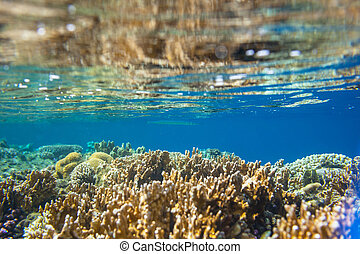 Coral reef in Red Sea, Egypt