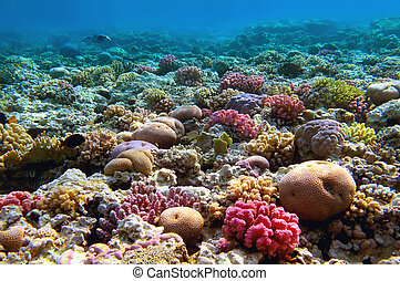 Coral reef, Red Sea, Egypt.