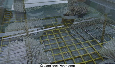 A shot of coral reef research inside a laboratory.