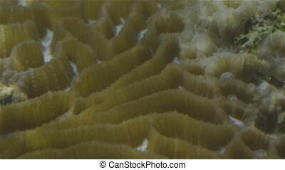 Coral reef research - A shot of coral reef research inside a...