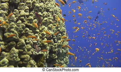 Coral reef - Sea life - Colorful sea life