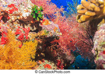 Coral reef. The red sea. Egypt.
