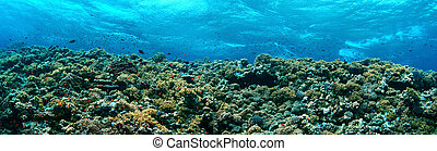 Tropical coral reef and small fishes in the Red Sea.