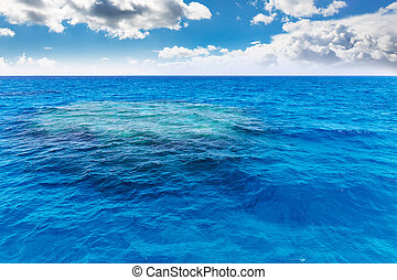 Coral reef under water.
