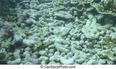 Coral reef underwater - An underwater gopro shot of corals...
