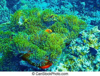 Coral reef underwater background