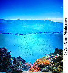 Coral reef underwater background ready for design. Pure water