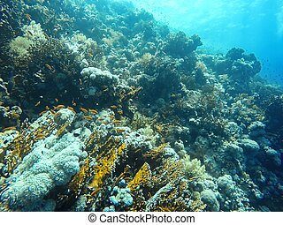 Coral Reef underwater in the sea