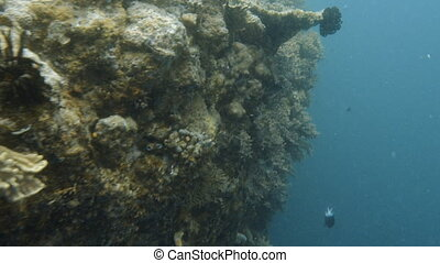 Coral reef underwater shot - A medium shot of a coral reef...