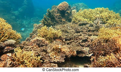 Underwater view on the coral reef in tropical seas