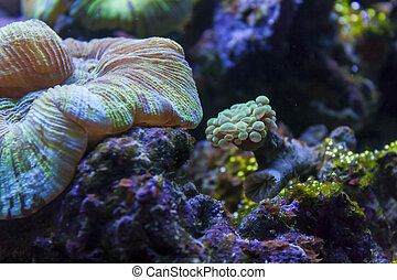 Coral Reef Underwater World